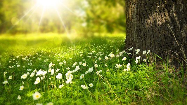 朝日をあびる草花
